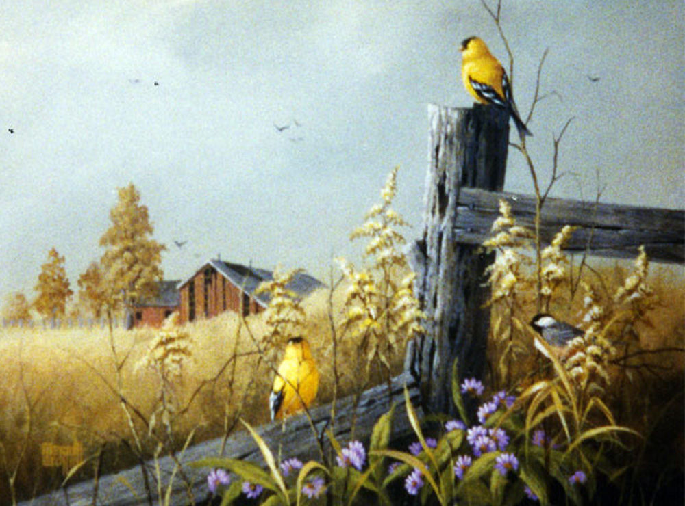 Yellow finch and the red barn