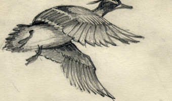 Duck Flying Study