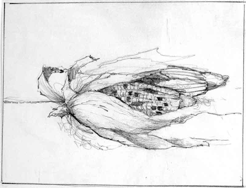 Indian Corn Study