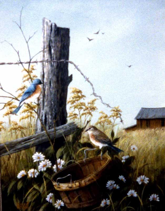 Bluebirds in the Field
