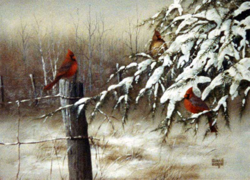 Cardinal and The Fence