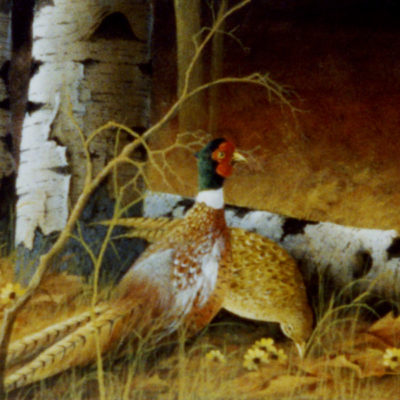 The Pheasants and The Birch